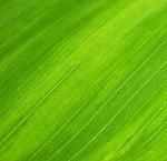 alimenti che fanno bene ai capelli spinaci